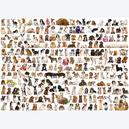 Afbeelding van 1000 st - The World of Dogs (door Eurographics)